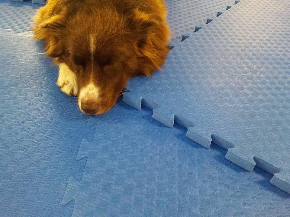 Hundesportboden Sporthalle