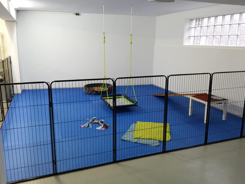 Trainingshalle Welpen