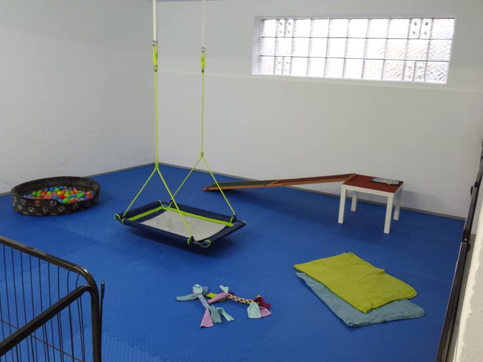 Trainingshalle Welpenbereich